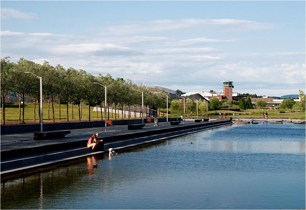 Pies kąpie się w kanale na miejscu dawnego pasa startowego lotniska Fornebu