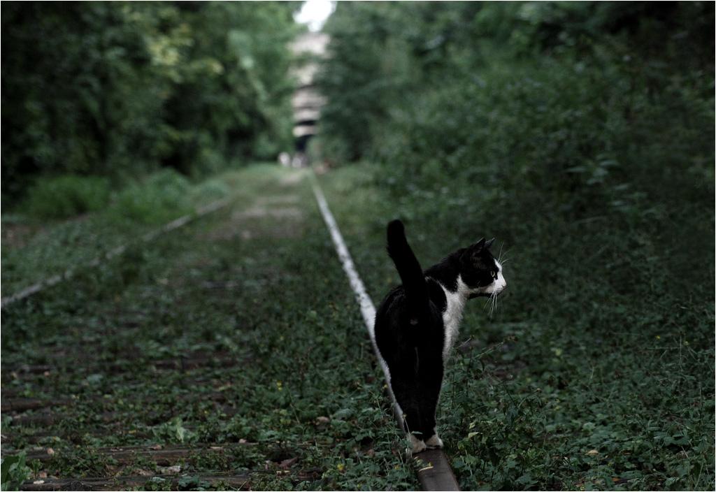 Koty to jedni z nielicznych zwiedzających stare torowisko