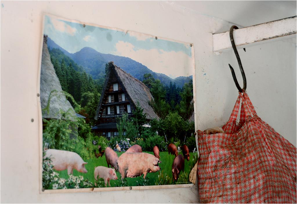 Być może sprzedawcy mięsa wierzą, że tak właśnie wygląda świński raj, do którego zwierzęta trafiają po uboju. Tylko skąd w Boliwii szwajcarski pejzaż?!