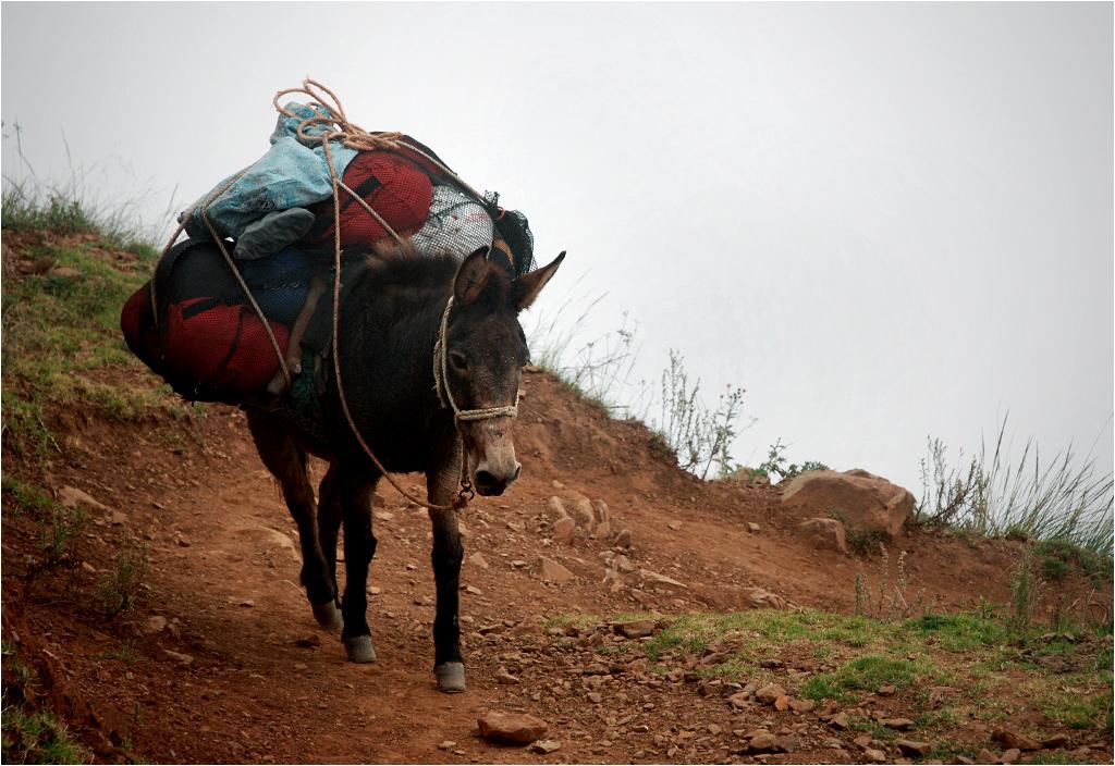 Transport towarów w Andach, rok 2013