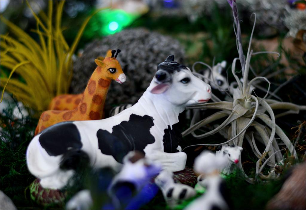 Catac, Peru. Żyrafa w szopce i lama z uszminkowanymi... ustami?