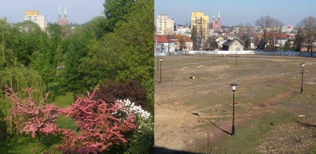 Rybnicki park przed i po wycince. Fot. Teresa Kaźmierska (źródło: bryla.pl)