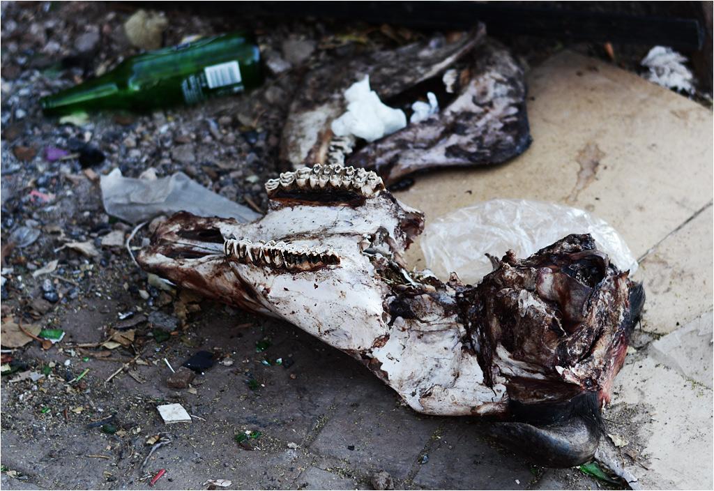 Jeśli przypatrzeć się bliżej, okazuje się, że jednym ze śmieci pod nadpalonym drzewem jest czaszka sporego zwierzęcia