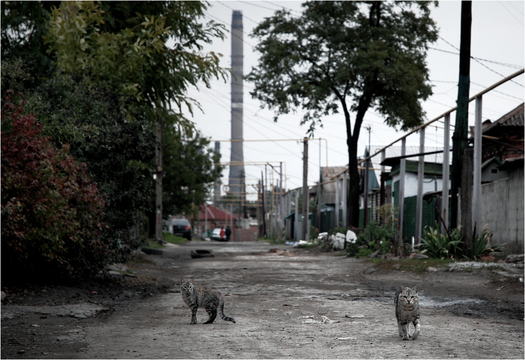 Mariupol, Ukraina. Koty spacerują ulicami osiedla domków jednorodzinnych