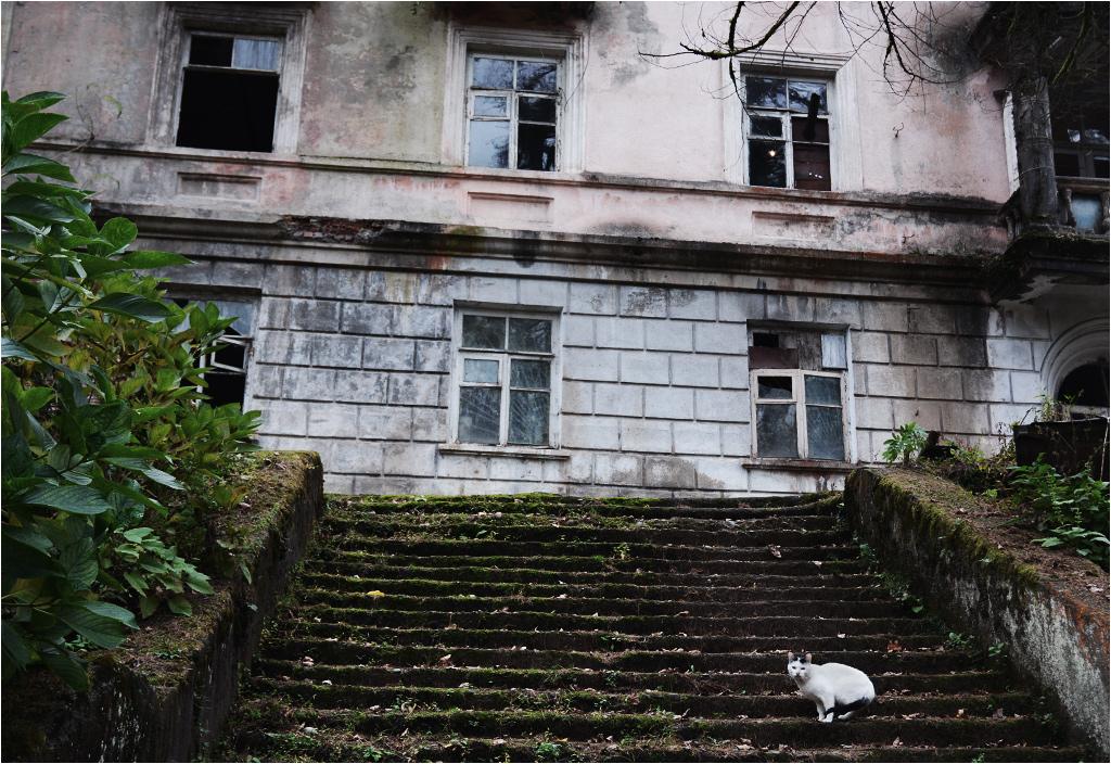 Życie w Akarmarze - kot i świecąca się na pierwszym piętrze żarówka