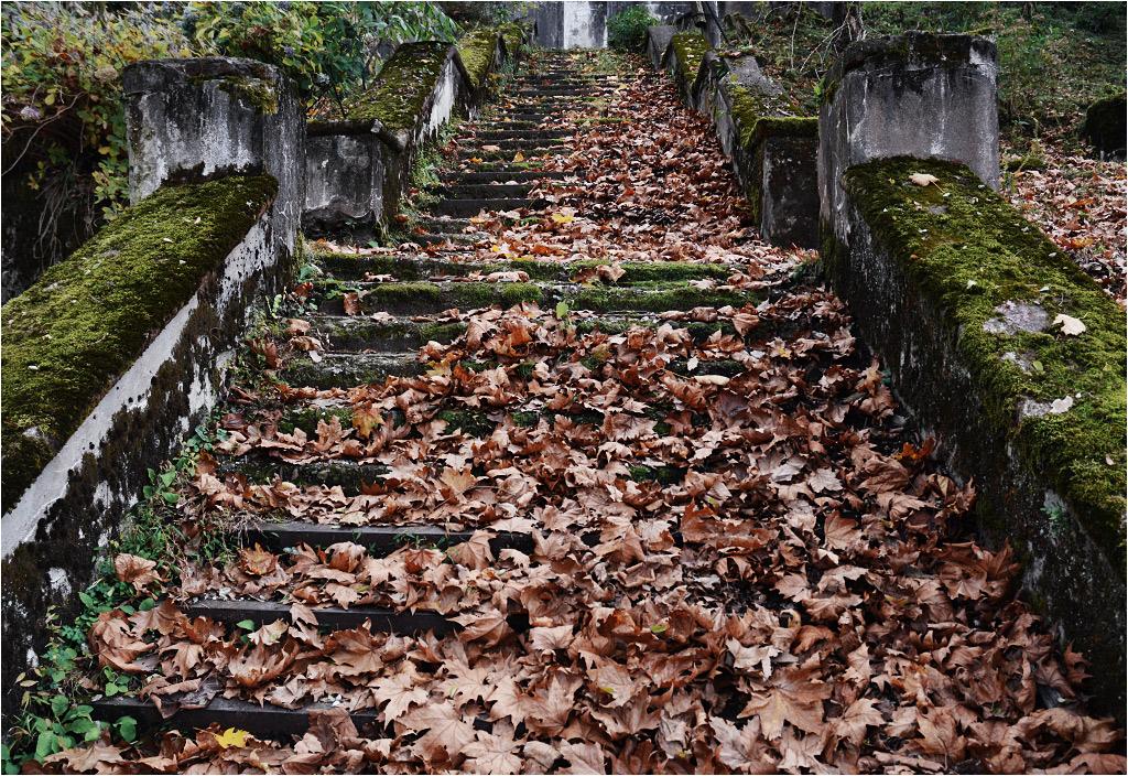 Jesienna Akarmara tonie w liściach