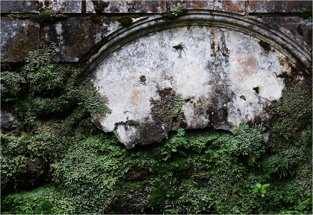 Zarośnięte detale dawnych miejskich murów
