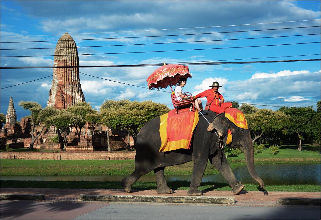 Słoń wiezie turystę. Widać poszarpane ucho zwierzęcia - najbardziej wrażliwą część jego ciała. W tle świątynia Wat Phra Ram