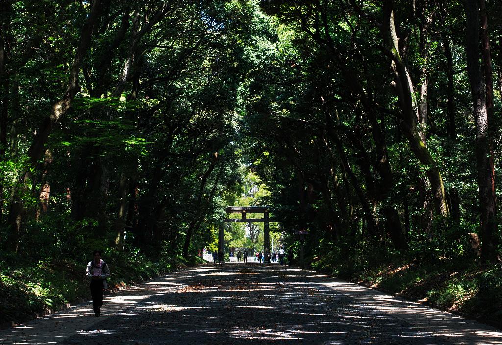 Główna alejka w Yoyogi Park