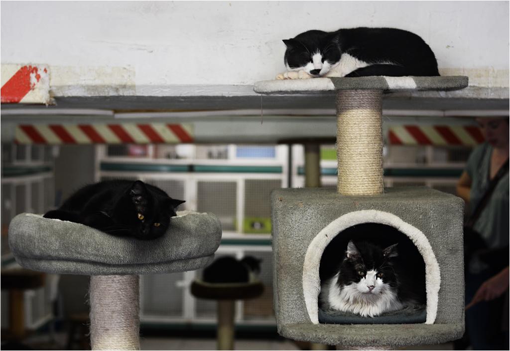 Przytulne wnętrze schroniska. Tu spędzają czas koty po zabiegach albo te, którym na ulicy jest zbyt gorąco/zbyt mokro