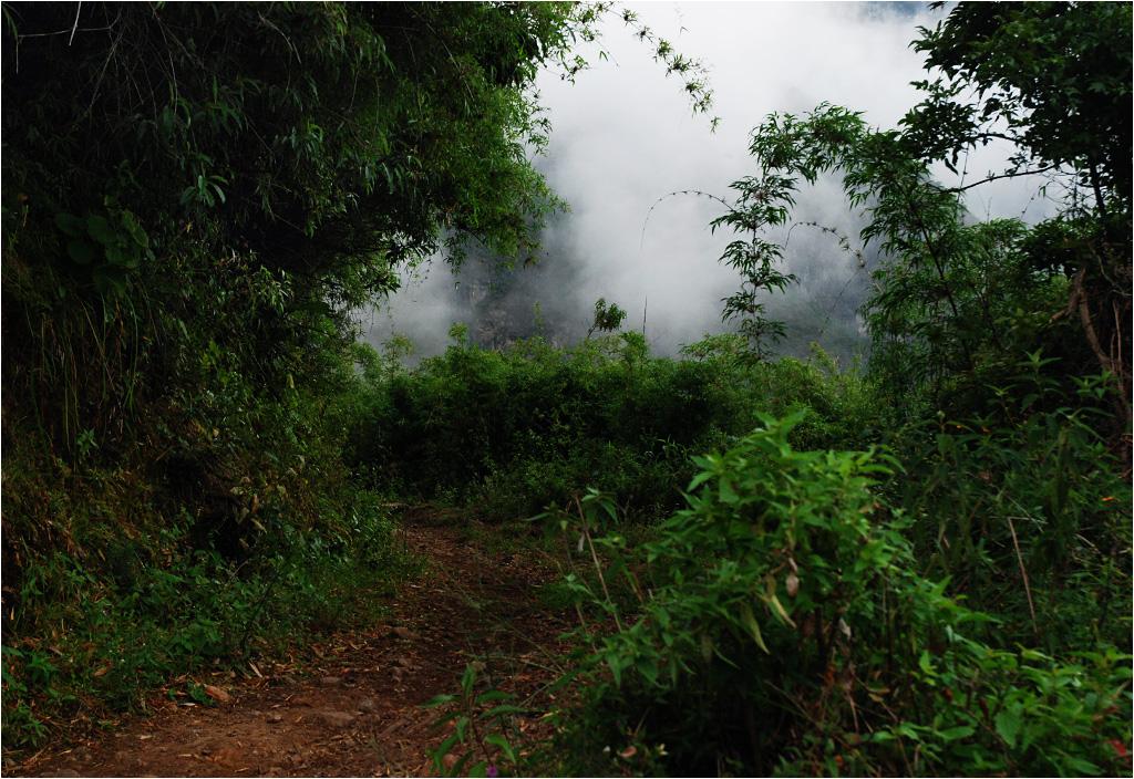 Na zacienionych stokach rozrasta się dżungla