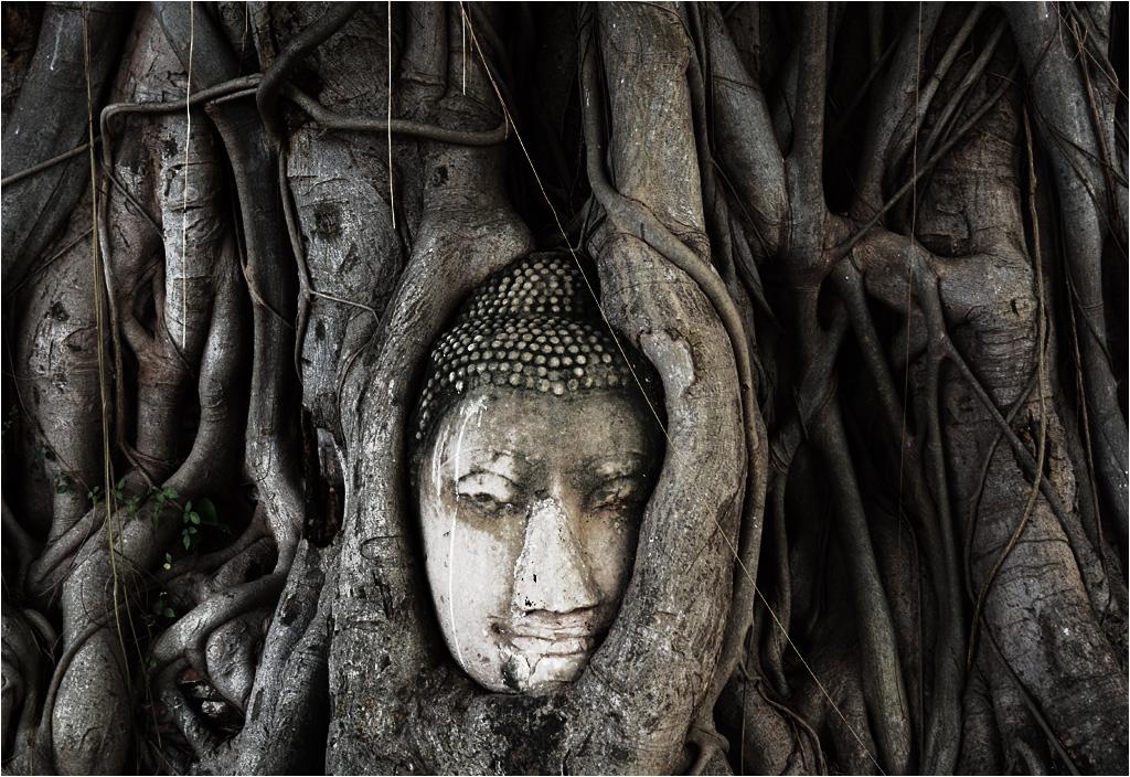 To kadr, który przywozi ze sobą każdy turysta. Wrośnięta w drzewo głowa Buddy z Wat Mahathat