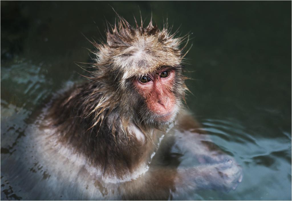 Ciepła kąpiel trwa w najlepsze