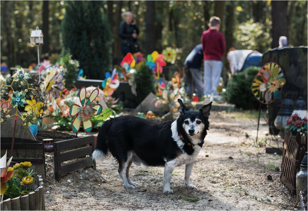 Kundelek odwiedza braci na cmentarzu