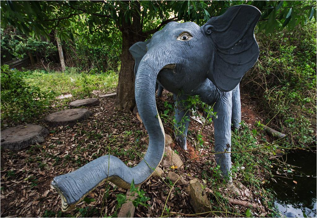 Słoń też jakby trochę zagubiony