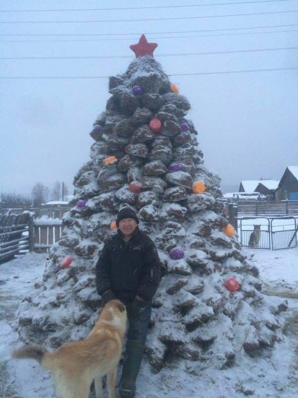 Rosyjska nawozowa choinka i jej autor. Źródło: http://vnews.agency/news/world/25025-v-yakutii-soorudili-elku-iz-navoza-foto.html