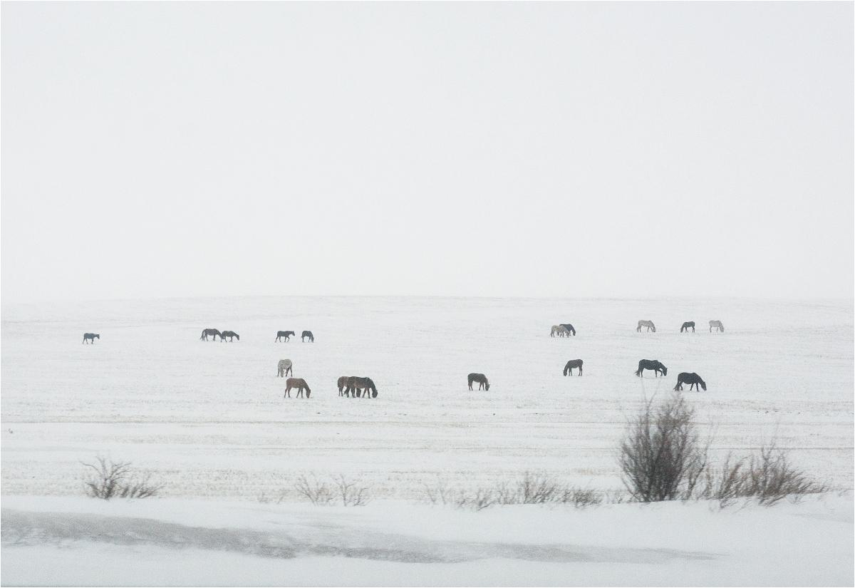 Widziałem dzikie konie... Stado pasące się w okolicach autostrady. Fotografia zrobiona z samochodu