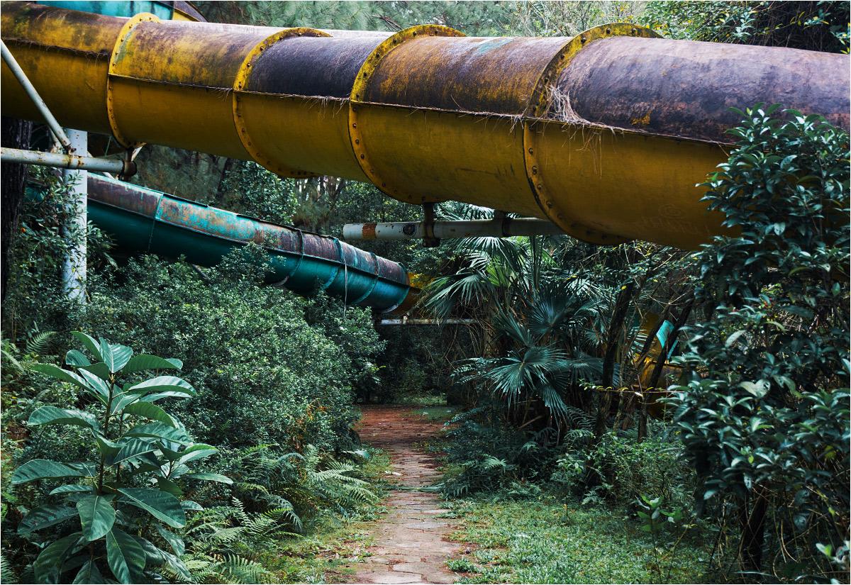 Ścieżki w parku coraz bardziej zarastają dżunglastą roślinnością
