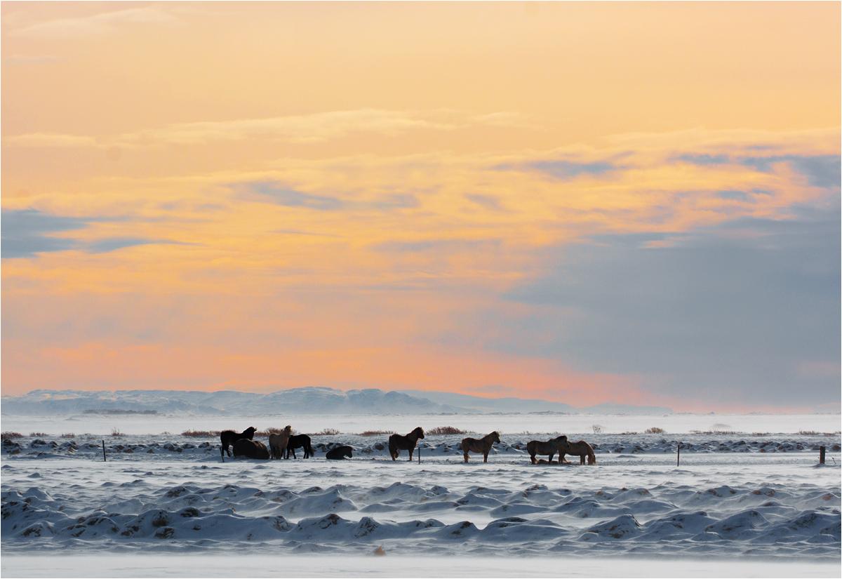 Słońce chyli się ku zachodowi, a konie wciąż w pracy