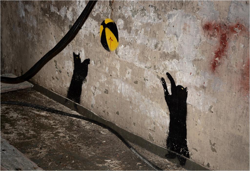 W zachowanym bunkrze kociaki grają w atomową piłkę