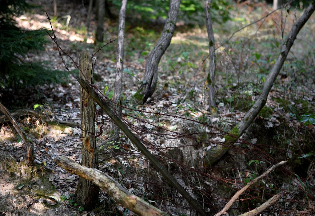 Pozostałości okopów i płożące się po lesie druty kolczaste