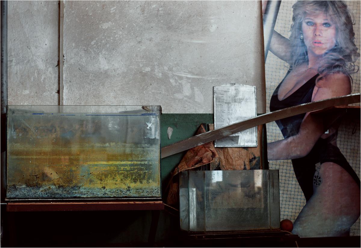 W bydgoskim Zachemie akwarium wygrało z (nie)gołą babą w konkursie o to, kto pierwszy zarośnie mchem