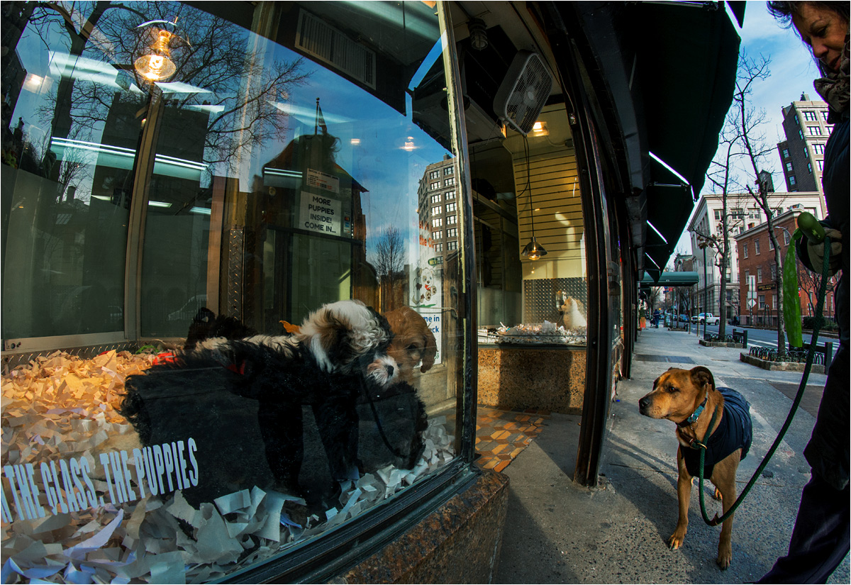 Nowy Jork, Christopher Street. Wolny (choć na smyczy) pies przygląda się psom akwariowym