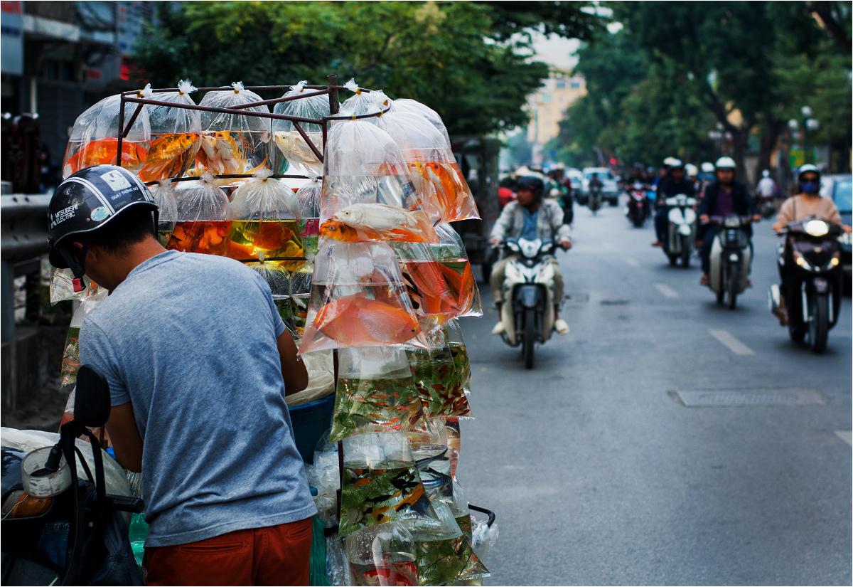 Hanoi. Sprzedawca ryb na poboczu dwupasmówki