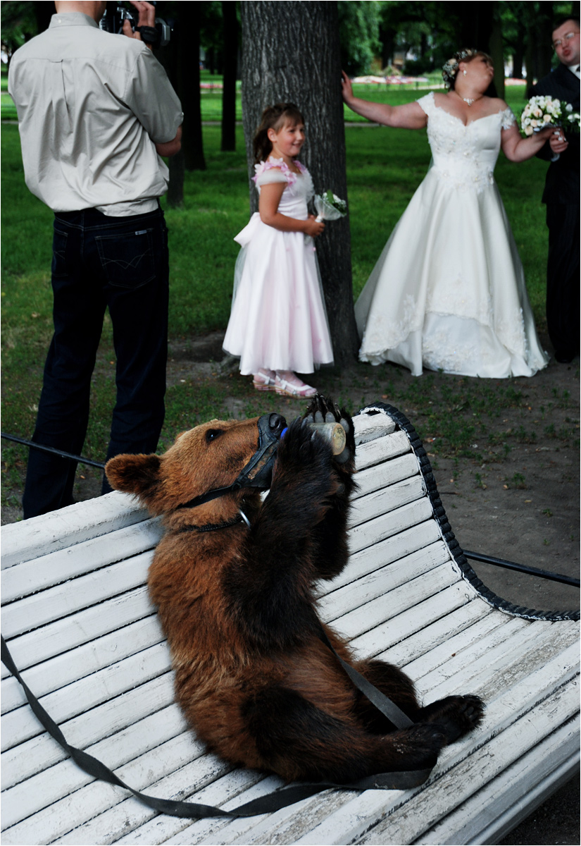 Parkowy niedźwiadek w Petersburgu