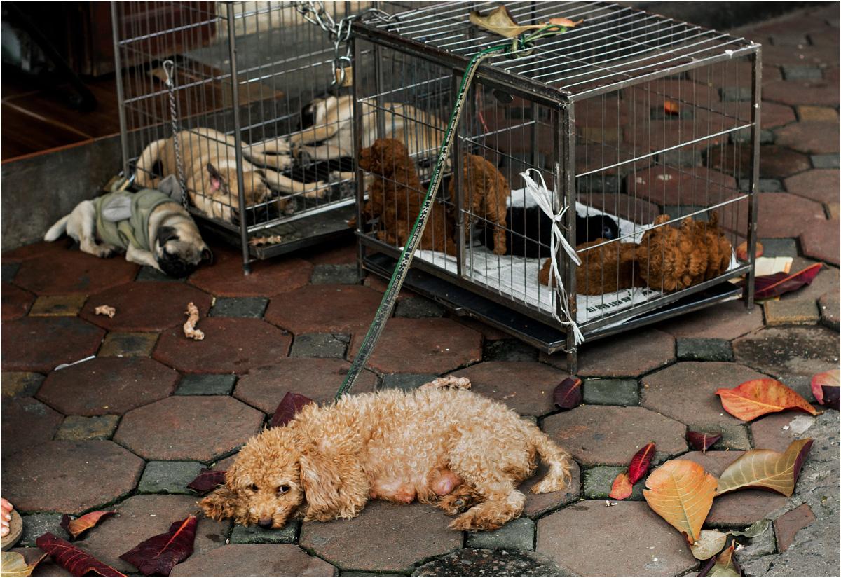 - Mniam mniam - mówi właściciel tych psów, demonstracyjnie pakując palce do jamy ustnej