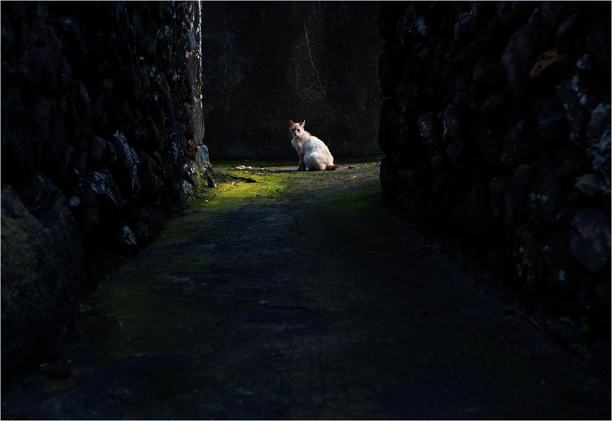 W ciasnych zaułkach wioski częściej można spotkać zwierzęta, niż ludzi