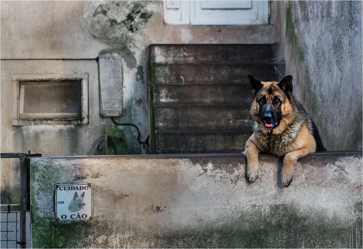 Pies sprzed kościoła całymi dniami obserwuje życie wyspy