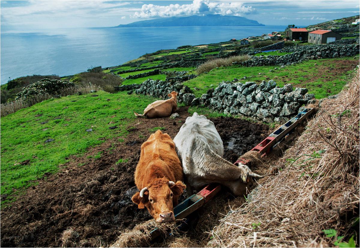 Mieszkanki Corvo jedzą obiad. W tle wyłania się pobliska wyspa Flores