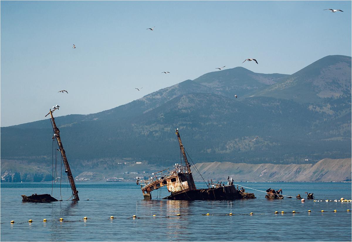 Mewy obsiadają stare wraki statków