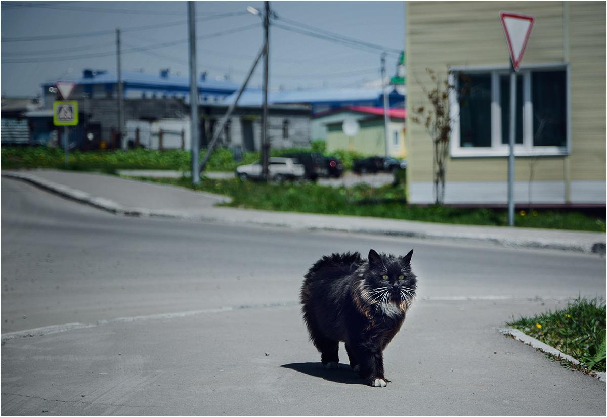Miasto bezogonowych kotów