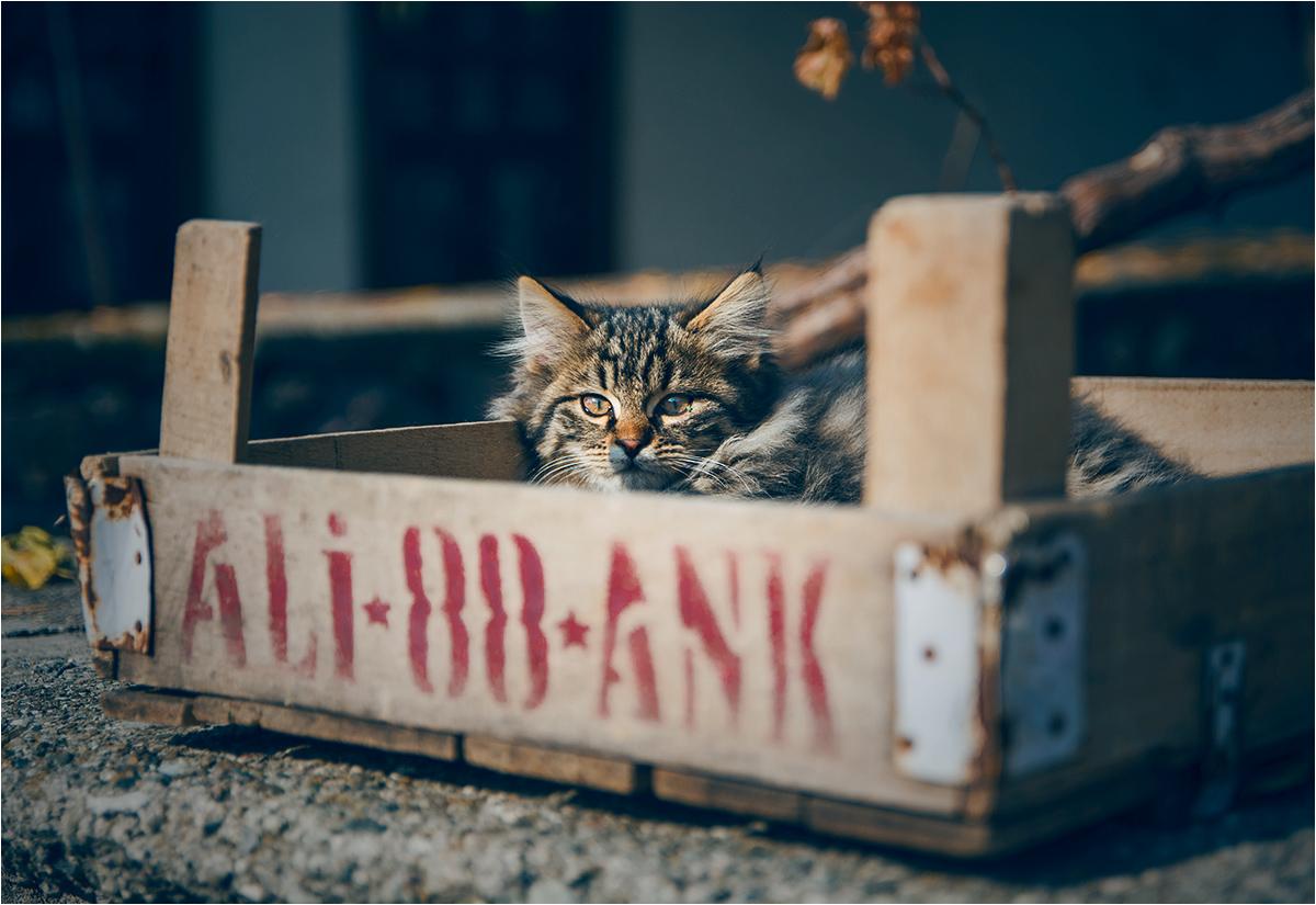 Jeden z licznych kocich mieszkańców cytadeli