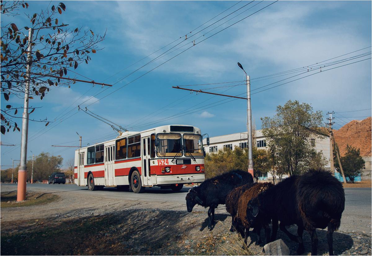 A inne pasą się przy trasie, koło przystanku trolejbusowego