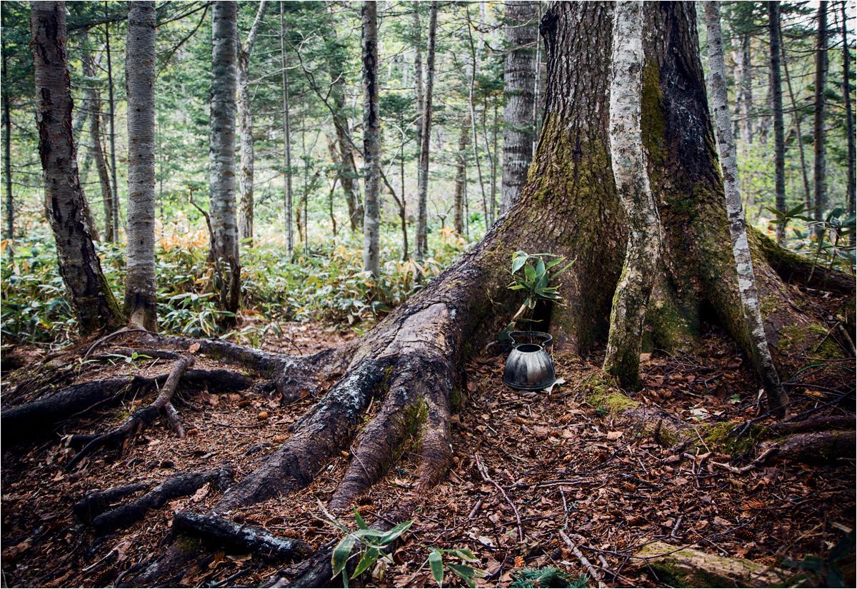 W kurylskim lesie. Stary czajnik, według słów przewodniczki, kiedyś wisiał na gałęzi i służył jako drogowskaz. My znaleźliśmy go na ziemi - najwidoczniej jesteśmy tu jednymi z pierwszych ludzi w tym roku...