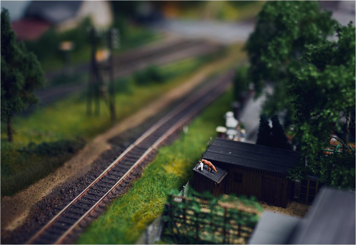 ... ale obok torów toczy się bogate życie wsi - widać między innymi lisa, porywającego gęś z zagrody