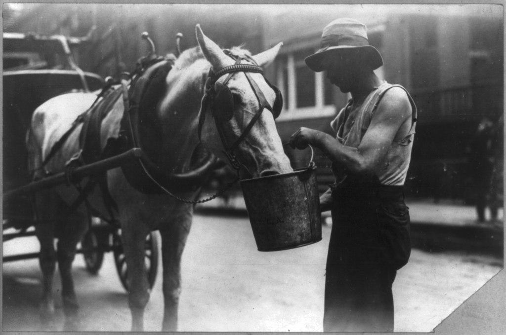 Ok. 1910 - nowojorski koń pijący z wiadra na jednej z miejskich ulic