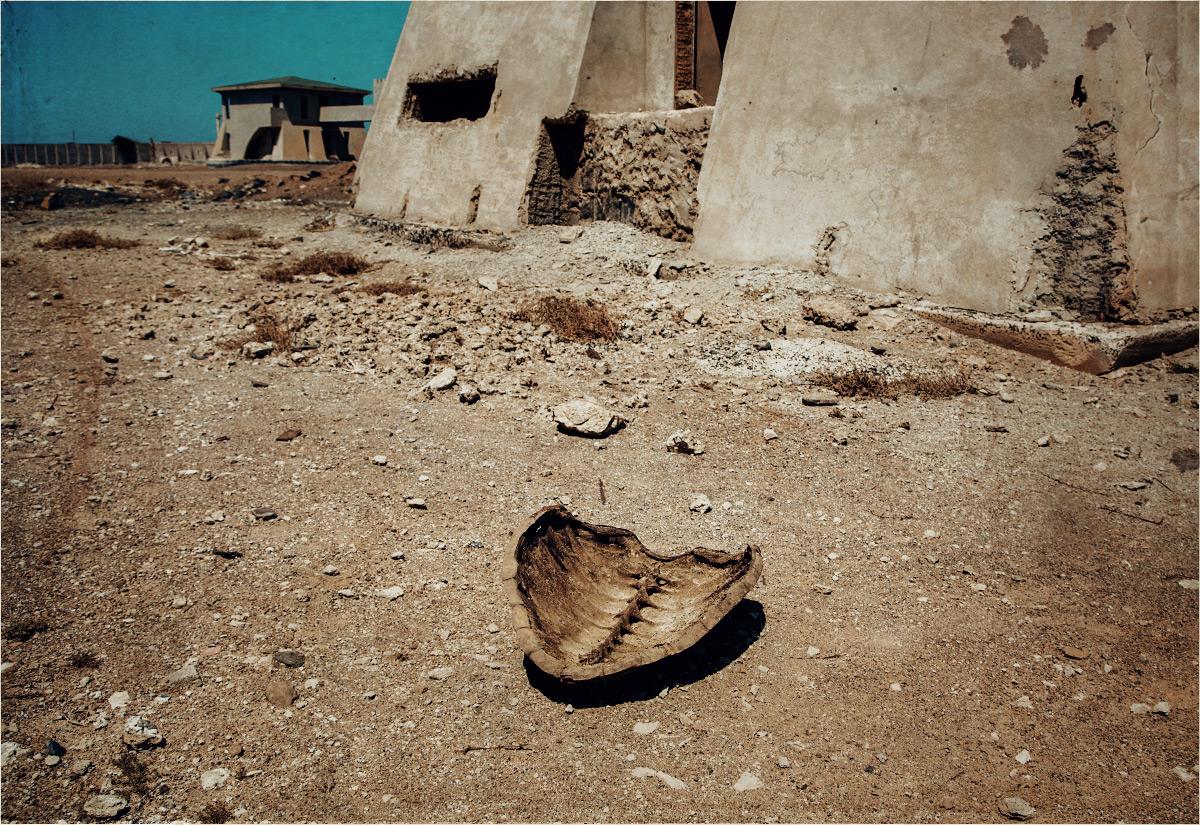 Skorupa żółwia pośrodku niedobudowanego osiedla