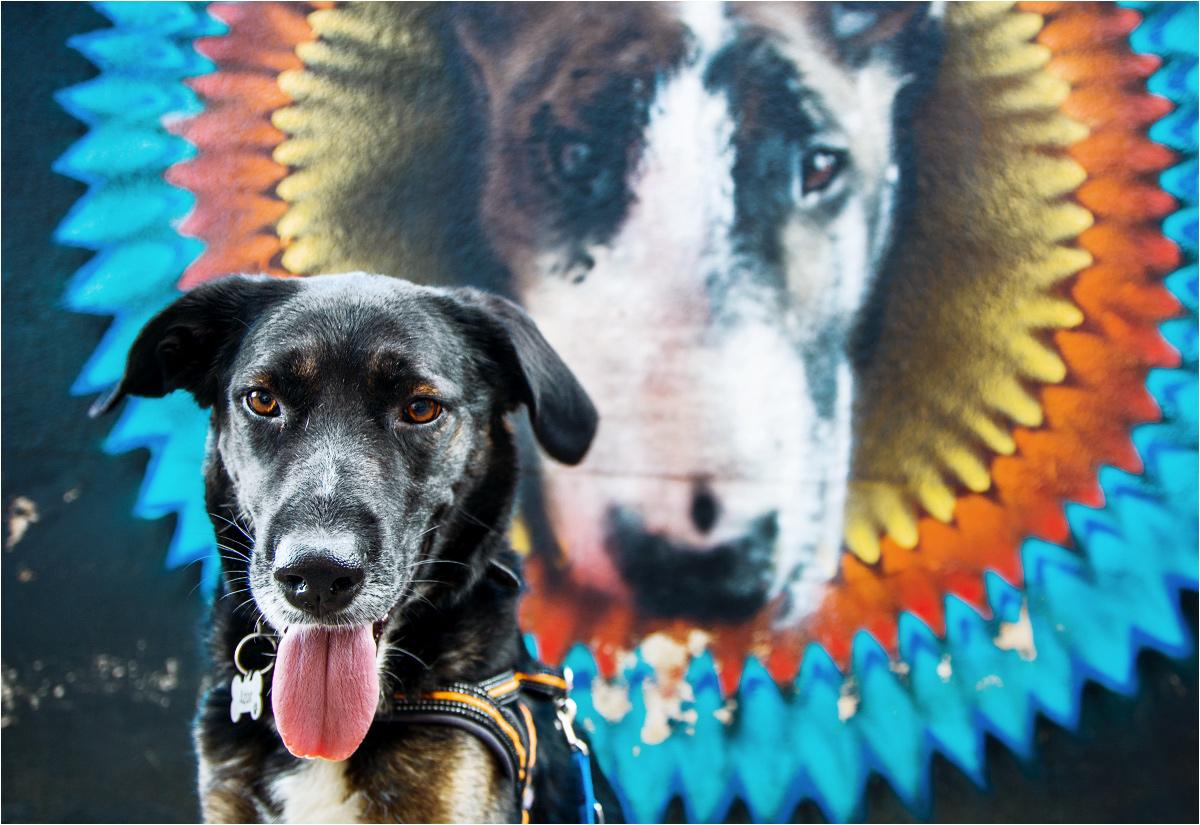 Pies Azor pozuje przed psim muralem przy ulicy Roosevelta