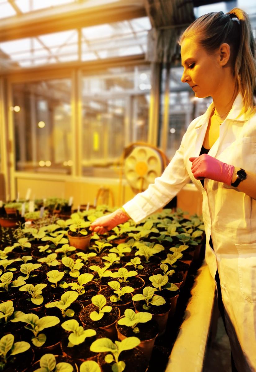 Daria Budzyńska w jednej ze szklarni Instytutu Ochrony Roślin - PIB w Poznaniu