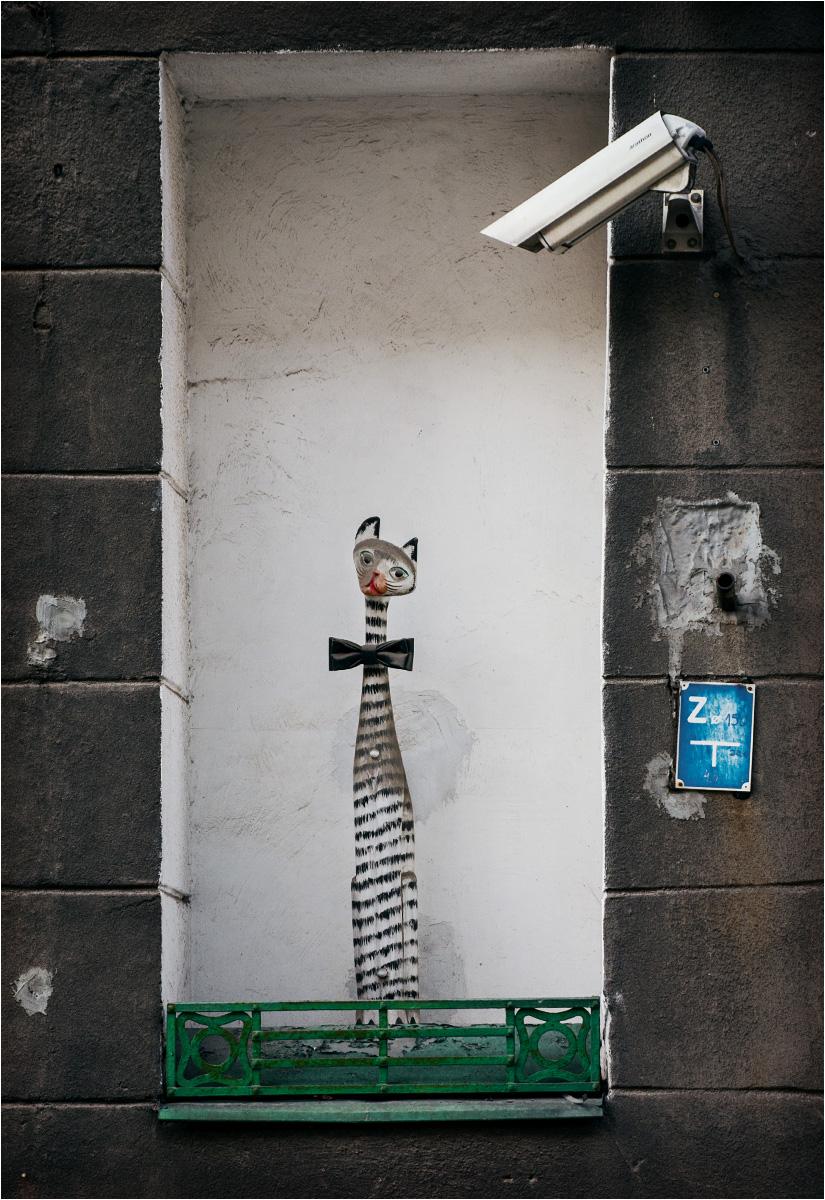 Kot w oknie na ulicy Poznańskiej