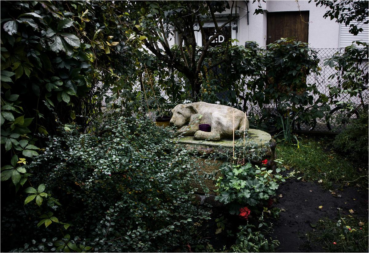 Kamienny pies upamiętnia wszystkich zwierzęcych mieszkańców kamienicy