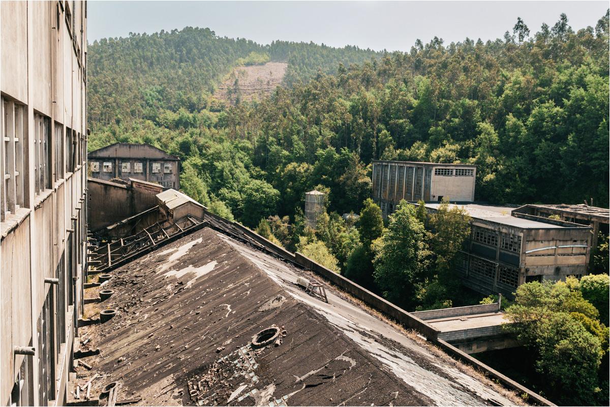 Fabryka na tle mieszanego lasu, w którym coraz większą rolę odgrywają drzewa eukaliptusowe