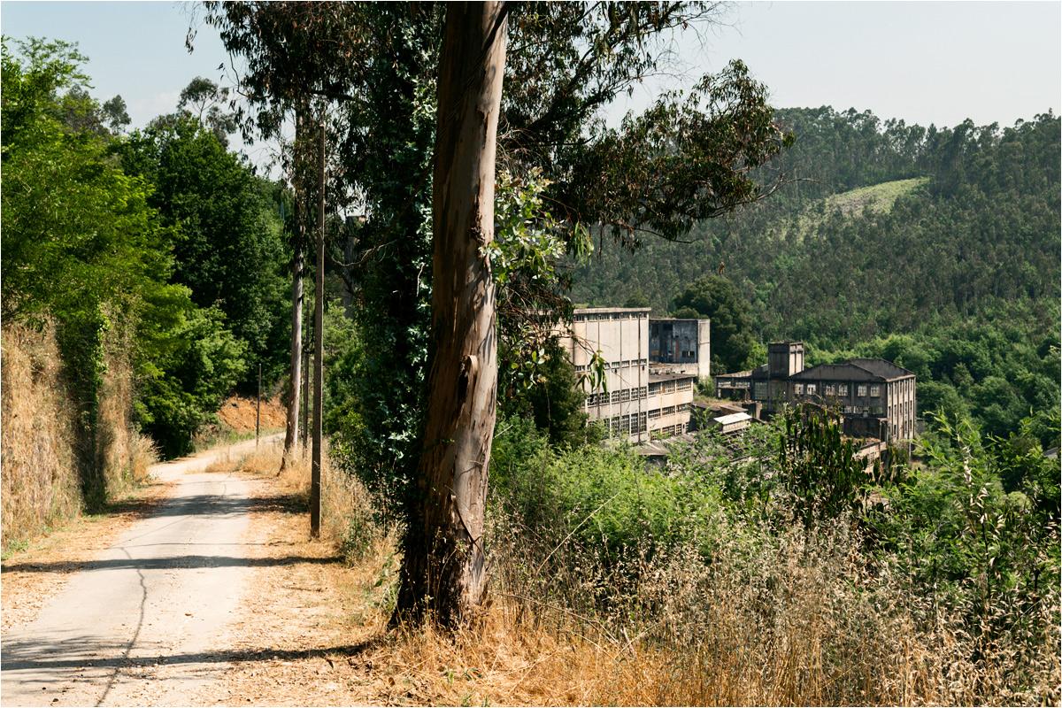 Drzewa eukaliptusowe rosnące przed pierwszą na świecie fabryką papieru z pulpy eukaliptusowej