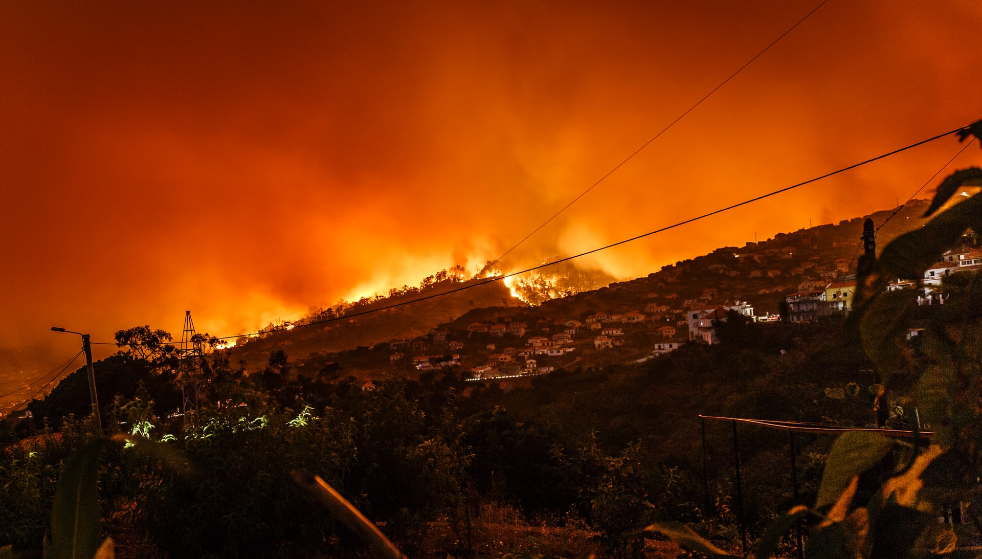 Pożar lasów eukaliptusowych w Portugalii. Fot. Michael Held, źródło: unsplash.com